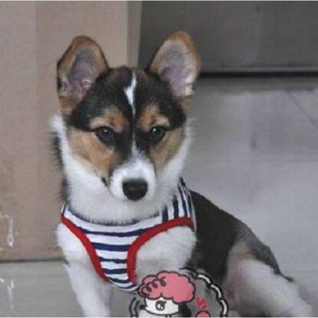 *On Sale* Pet Harness - Sailor Suit