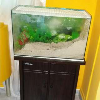 2ft X 1ft Cabinet Fish Tank