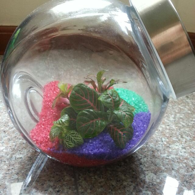 Closed Terrarium For Sale Design Craft On Carousell