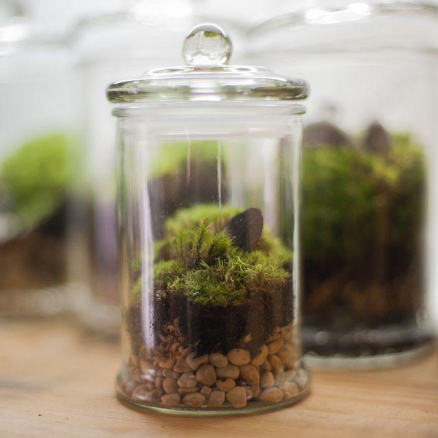 Standard Bottle Moss Terrarium Everything Else On Carousell