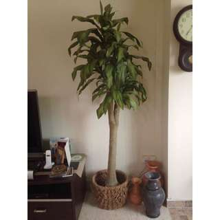 Used Artificial Tree And 3 Clay Vase