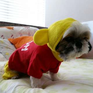 Pooh Dog Full Outfit