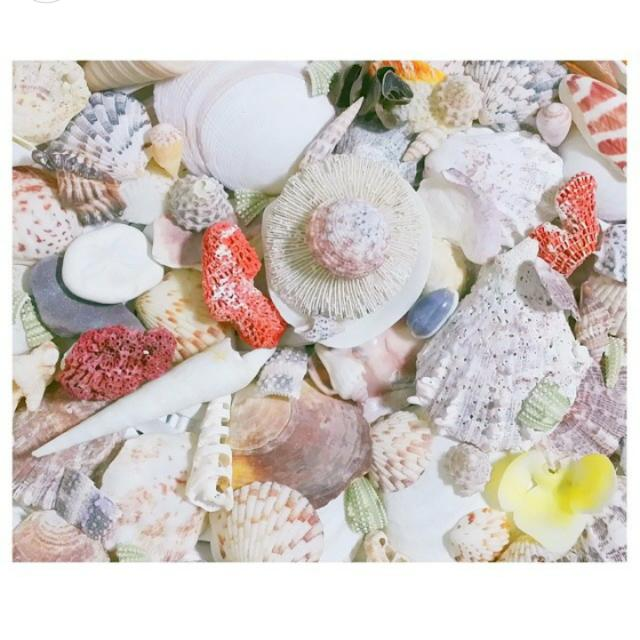 Beautiful South Sea Seashells