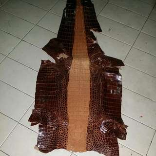 Crocodile Skin ( Genuine )
