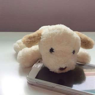 Cute Small Toy Dog