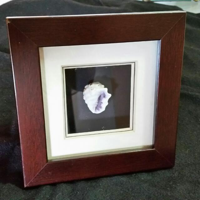 Sea Shell In Photo Frame.  Real Sea Shell