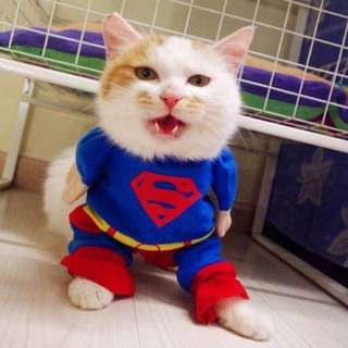 Pet Costume - Superman