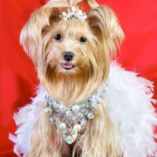 Dog Couture And Accessories