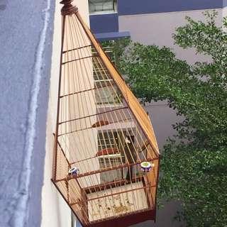 Half Jadi Jambul With Cage