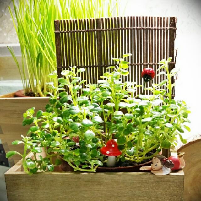 🌱 小植栽組
