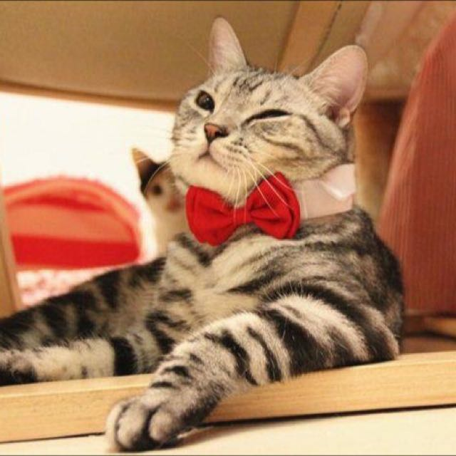 *On Sale* Pet Bow Tie Collar - Red (Z003A)