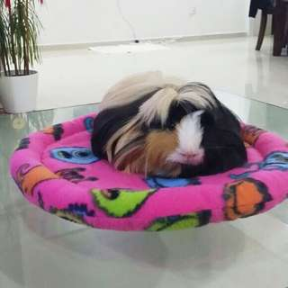 Snuggle Round Comfy Plate