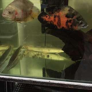 Fish!!! 🐠🐟🐬🐬🐋