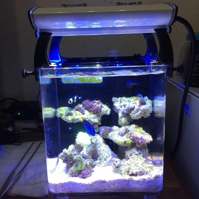 X1 1呎魚缸+雷公 THORTEX Q3專用燈