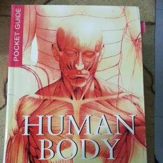 Human Body #1212YES