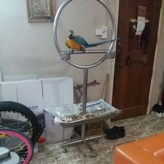 BIG STAINLESS STEEL PARROT STAND