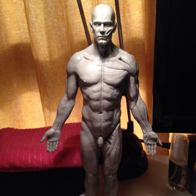 3dtotal Male Anatomy Figure Design Craft On Carousell