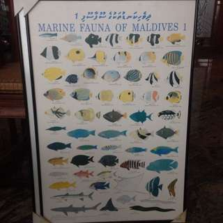 Marine Fauna Of Maldives Wall Art , Framed