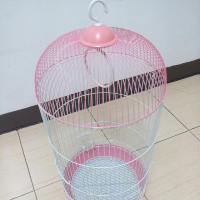 鳥籠 有人要養鳥嗎
