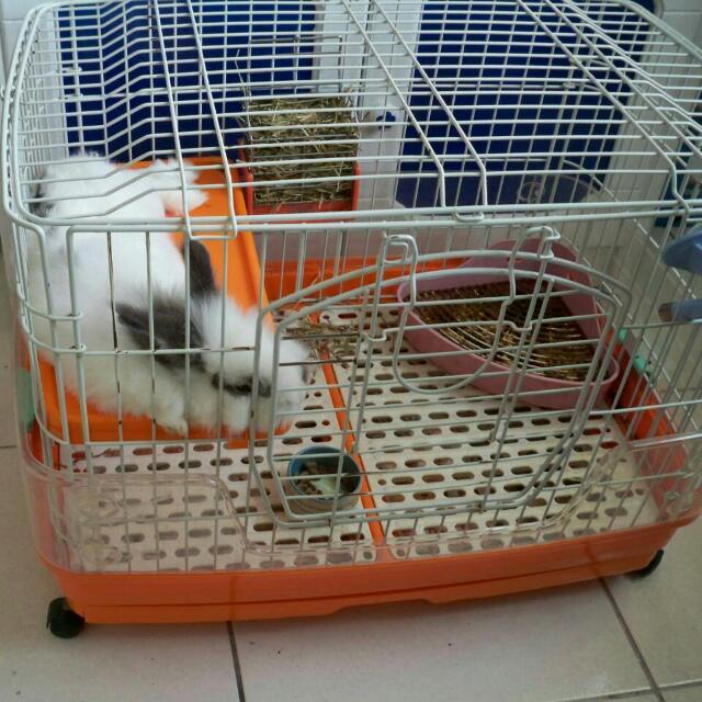二手雙層兔籠 限自取
