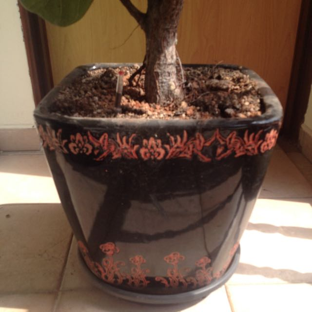 Decorative Ceramic Pot - Includes Plant