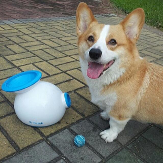 【待匯款】美國iFetch 寵物自動發球機