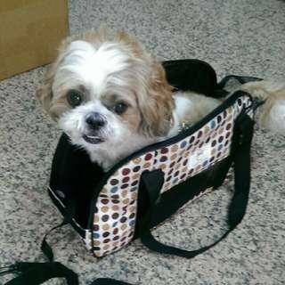 「全新」寵物外出袋/外出旅遊袋