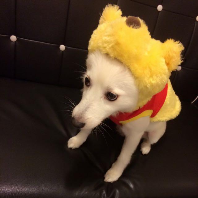 日本帶回迪士尼之Pet Paradise小熊維尼衣服