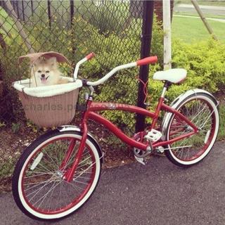 Vintage Dog Basket For Bicycles