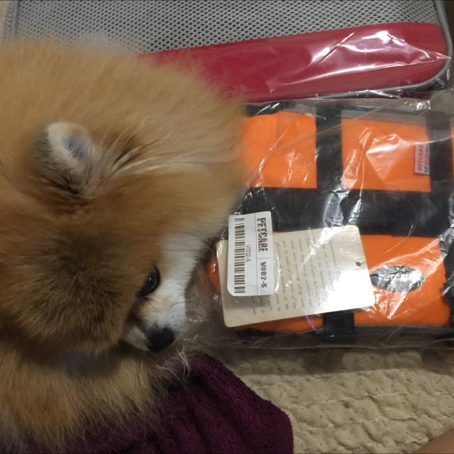 小型犬救生衣-S號