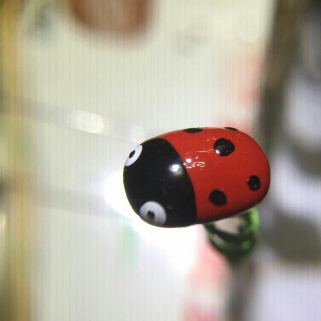 《咖啡手工園藝》瓢蟲
