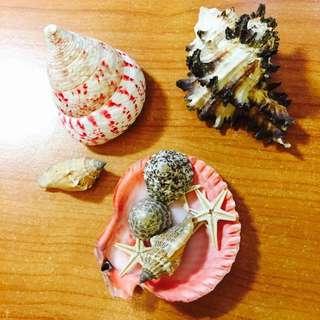工藝用貝殼🐚🐚