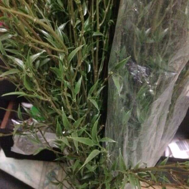 Artificial plants for sale...urgent