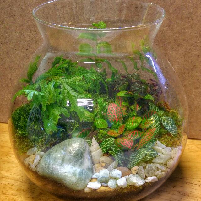 Mini Garden Pot  Weekend Potluck (Terrarium With Plants And