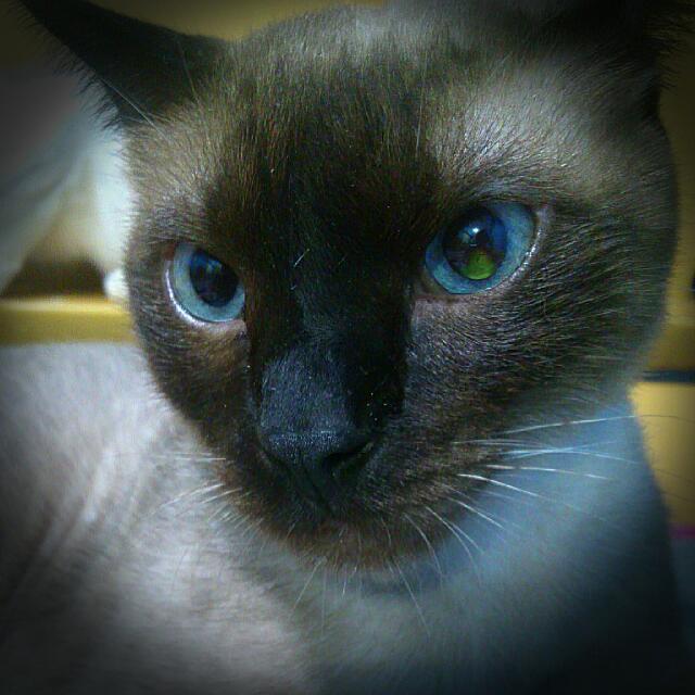 家庭式🐱貓咪美容🐱 pet beauty