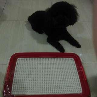 狗狗的尿盤