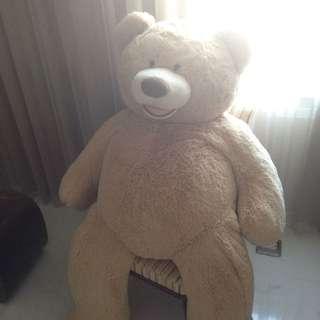 Costco大熊