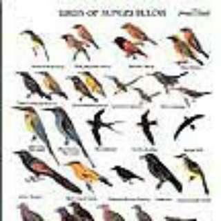 LOOKING FOR: Birds Of Sungei Buloh