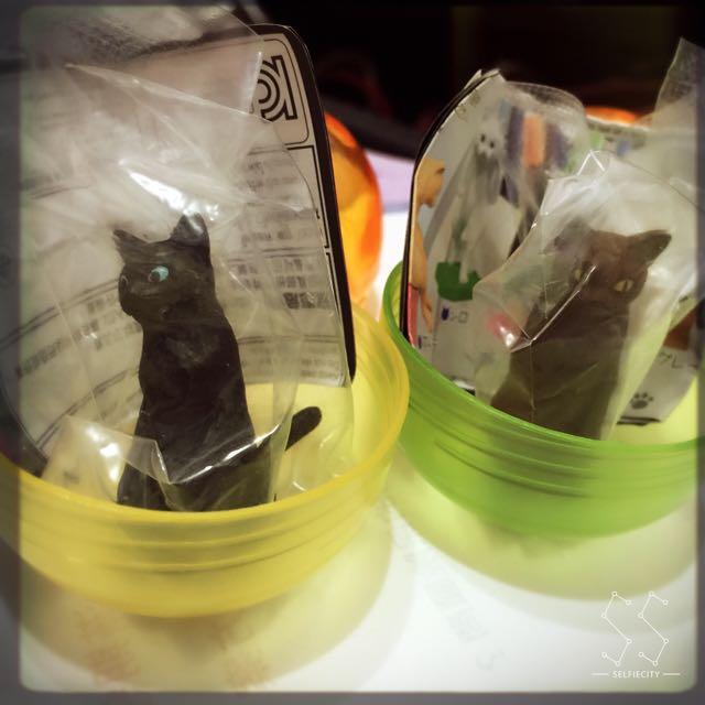 (保留中)貓背 🐱 扭蛋 黑貓 咖啡貓 療癒