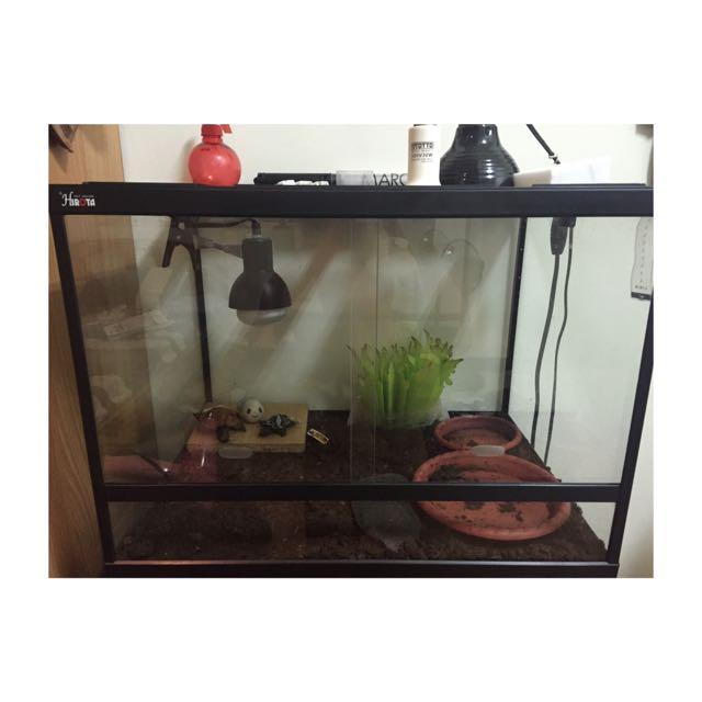 HIROTA 爬蟲箱