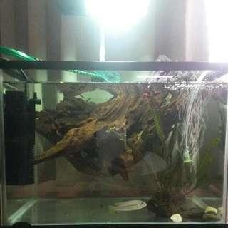 Fish Tank Aquarium Set