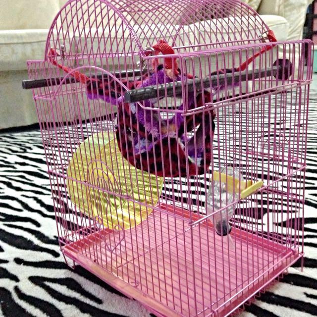 sugar glider cage sangkar sugar glider