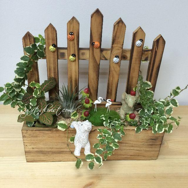 Miniature Gaden Plants Gift Birthday Gifts Gardening On Carousell