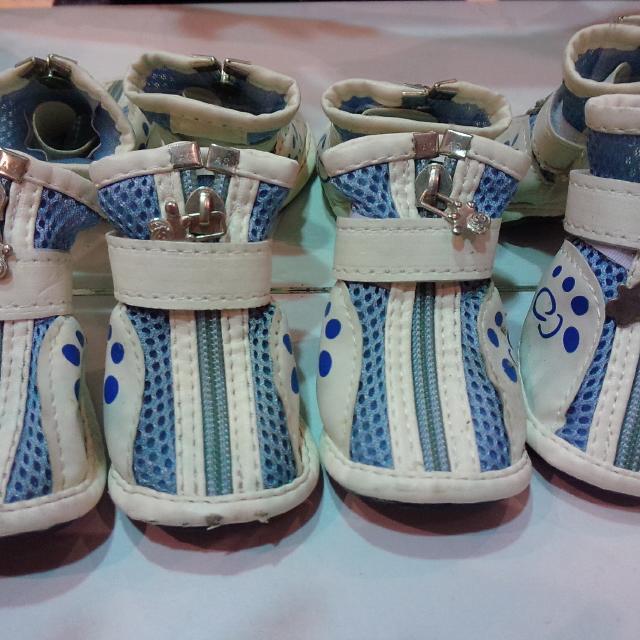 #2手商品便宜賣 寵物 鞋 超可愛
