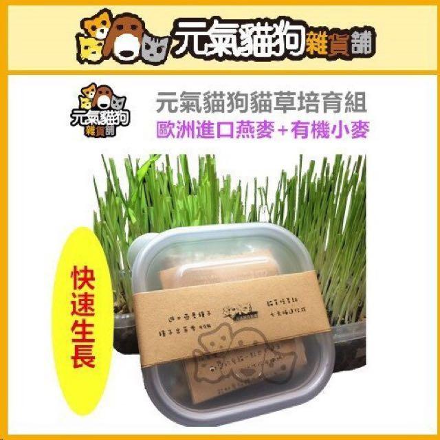 貓草培育組 進口 燕麥 種子 99%出芽 最快5-7日收成 燕麥草 化毛 純天然 無農栽培 體內環保
