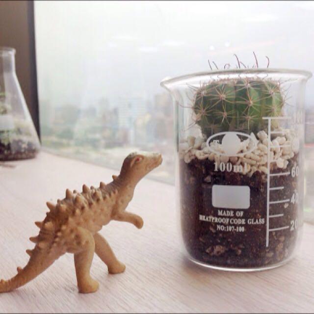實驗室燒杯仙人掌植栽 含運 文青 設計 Nude 工業風 北歐 多肉 多肉植物
