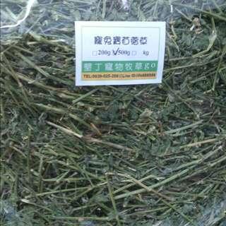 墾丁苜蓿草
