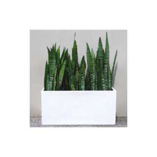 snake plants and money plant