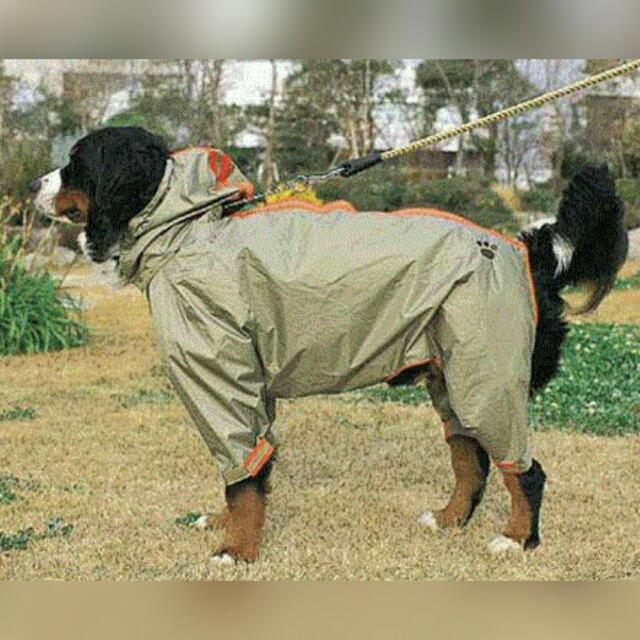 日本帶回  Doggyman大型犬雨衣