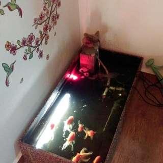 Indoor Water Feature Pond